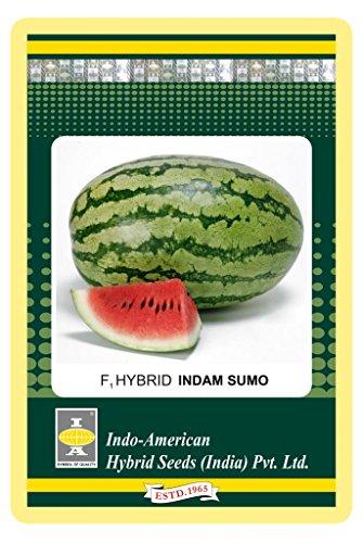 Indo American Hybrid Seeds IAHS58