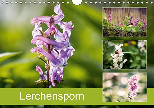 Lerchensporn (Wandkalender 2020 DIN A4 quer): Der Frühlingsbote (Monatskalender, 14 Seiten ) (CALVENDO Natur)