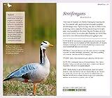 Gartenvögel: Die wichtigsten Arten entdecken und bestimmen - 6