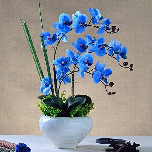 Feuille//Vert // 1 Paquet REFURBISHHOUSE Fleur Artificielle Feuilles de Phalaenopsis Vert Orchidee Papillon