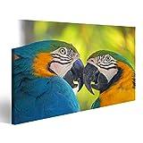 islandburner Bild auf Leinwand Nahaufnahme Paar Blaue und gelbe Aras Papageien Wandbild, Poster, Leinwandbild, Deko, Wanddeko, Wandtattoo