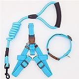 LIZONGFQ Hundehalsband Set für kleine Welpen Haustier Hundehalsband verstellbare Schnalle Gürtel Hundehalsband Traction Dogs liefert S/M/L Größe,Red,M