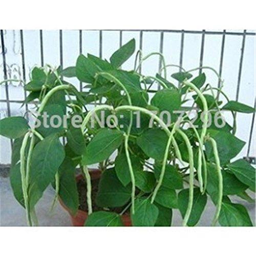 Pas de graines de haricots de cadre de légumes pour la maison jardin plante extérieur - 30 pcs / lot