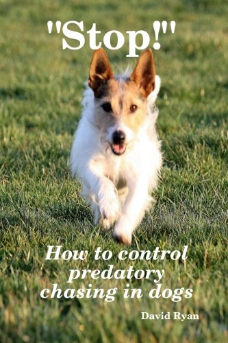 stop-how-to-control-predatory-chasing-in-dogs