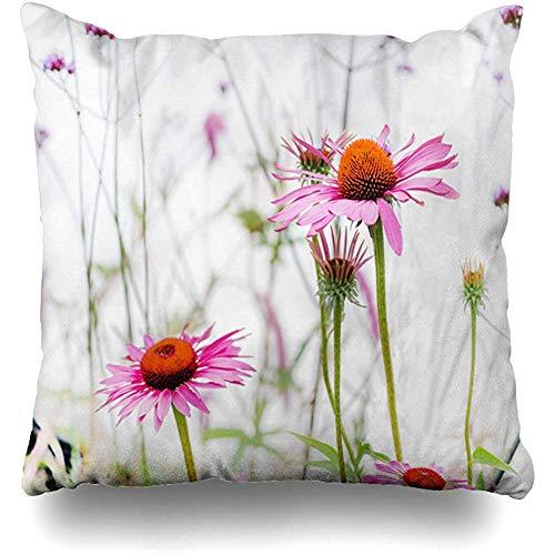 K.e.n Dekokissenbezug Orange Braun Blüte Echinacea Purpurea Blumen Gegen Weiße Medizin Asteraceae Natur Blühender Kissenbezug -