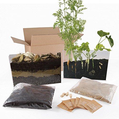 Vivarium d'observation racines pour jardin à l'école