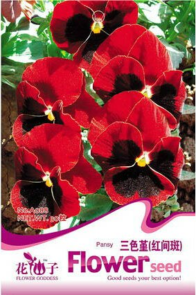 1 Original Pack, 30 graines / Pack, Red Blotch Pansy Viola wittrockiana long Blooming Hardy Flowers # A088