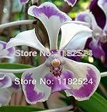 Orchidea vanda orchidee for Semi orchidea