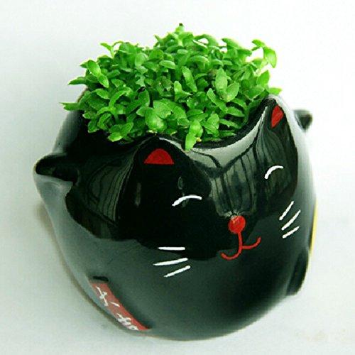 Kungfu Mall DIY Keramik Karikatur Katzen Muster Vase Mini Tier Cat Grün Gras Topf Pflanze Desktop Office Decor
