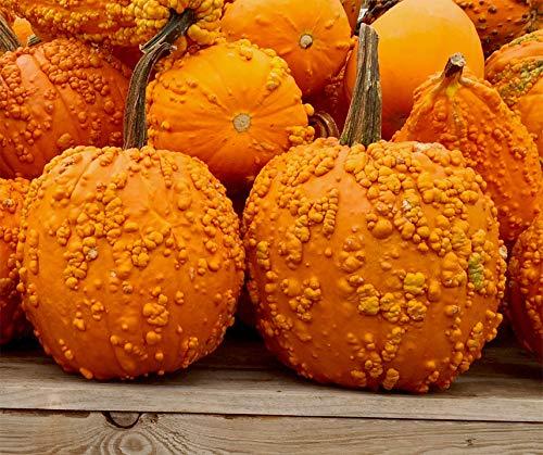 Bobby-Seeds Halloweens Standard Goosebumps F1 Portion