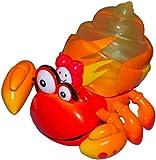 Xia-Xia Hermit Crab - Trinidad