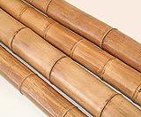 Bambusstange Moso natur 200cm Durch. 8 bis 10cm, gelbbraun hitzebehandelt - Bambus Rohr Bambus Latten farbige Bambusrohre Bamboo Bambus Halbschale Bambusstangen --> großes Sortiment an Bambusrohre und Rohre aus Bambus Bambus-Rohre