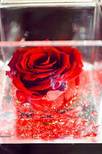 Rot 5cm Würfel rosa Stabilisierte rote Duftkerze, passionefiori. IT der Kubus mit Pink ist eine echte Pink dass hält 5Jahre–Blume auch bekannt als Pink Eterna, nicht braucht von Wasser Ne Licht. (Art Duftkerzen Gel)