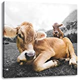 Almkuh in den Bergen B&W Detail, Format: 70x70 auf Leinwand, XXL riesige Bilder fertig gerahmt mit Keilrahmen, Kunstdruck auf Wandbild mit Rahmen, günstiger als Gemälde oder Ölbild, kein Poster oder Plakat