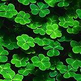 SOTEER Glücksklee Samen Vierblättriges Kleeblatt Bonsai Blumensamen - Liebe und Glück für den Garten
