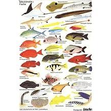 """Malediven 1 - Diveguide - Fische (nach """"Korallenfische der Welt"""", Lieske&Myers)"""