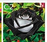 Lamdoo 60 Stücke Regenbogen Rose samen Blumensamen Holland Regenbogen Rose Samen Für Zuhause Gartenarbeit (schwarz und weiß)