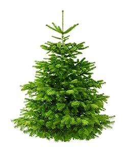 echte nordmanntanne weihnachtsbaum h he 160 180cm frisch. Black Bedroom Furniture Sets. Home Design Ideas