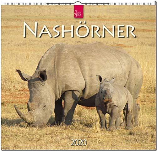 Nashörner: Original Stürtz-Kalender 2020 - Mittelformat-Kalender 33 x 31 cm