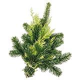 Echte Tannenzweige Nordmanntanne, Koniferen, Zypresse Handbund ca. 400-500 g - grünes Tannengrün frisch vom Gärtner - lange haltbar