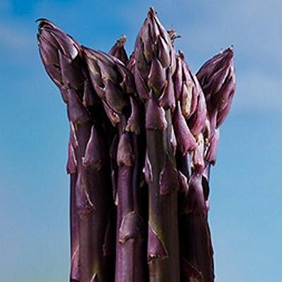 Spargelpflanzen Burgundine violetter Spargel (10 Pflanzen) von Springensguth auf Du und dein Garten