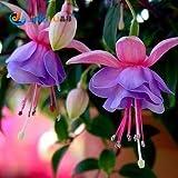 100 PC / Beutel Fuchsien Samen, Topfblumen, Diy Blumen pflanzt, Glockenblume, Laterne Begonia, Mischfarbe