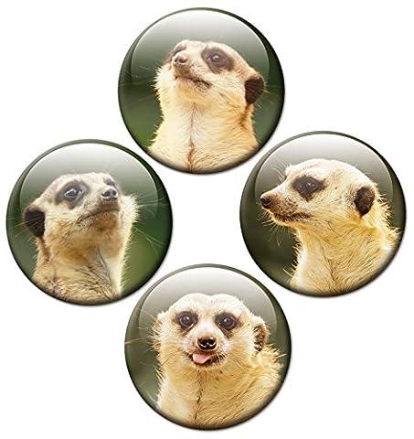 GUMA Magneticum 2528 Kühlschrankmagnete Erdmännchen - 4er Magnet Set Tiere Ø 50 mm - Kinder Magnete mit Motiv Tier Gesichter für Kühlschrank Magnettafel Pinnwand Whiteboard