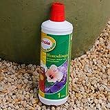 Schola Flüssigdünger mit Guano | 1-Liter-Flasche | für Zimmer-, Balkon- und Gartenpflanzen | Anwendung von April bis Oktober