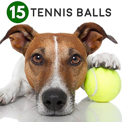 Bramble 15 Tennisbälle Gelb-Grün - Tennis Bälle & Trainingsbälle Zum Spielen für - Tennisbälle Hund