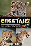 Cheetahs: Fun Facts & Pictures For Kids