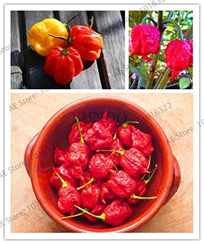 Promoción grande 200 Vehículo de la pimienta de frutas Las plantas, gigante de chile pimiento dulce Jardín + + Carolina del Reaper & quot!; + Planta de los bonsai chile picante