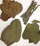 Bananen- Guaven- Maulbeer- und SeemandelbaumblätterSet (4x10 Stück) für Garnelen, Krebse & Co - original A-Markenware von garnelenshop24de - BLITZVERSAND