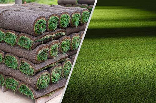 Rollrasen - 30m² echter Fertigrasen - Sorte: Premium Schattenrasen - Vorgedüngt - Frisch geschält - Gekühlt Geliefert (30 bis 500 qm verfügbar)