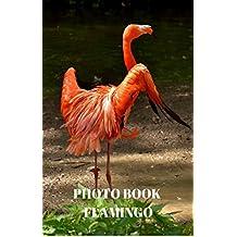 Photo Book : Flamingo (English Edition)