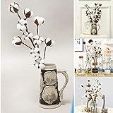 Gaddrt Naturellement séché tiges de Coton Ferme Fleur Artificielle de Remplissage Floral décoration, 21 Pouces
