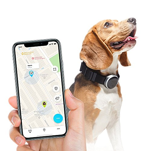 collier gps chien amazon