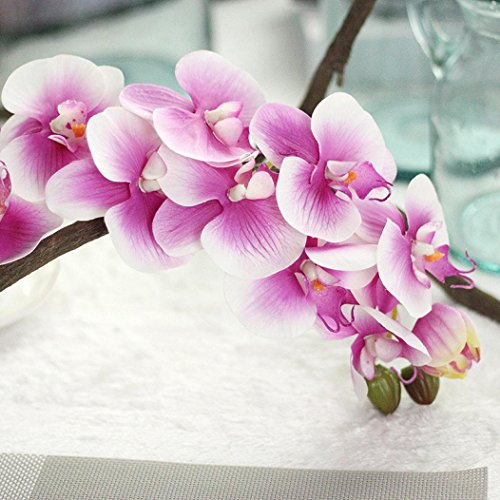 metterling Orchidee Phalaenopsis Zweig Hausgarten Diy Dekor Zimmerpflanze (BEGIE) ()