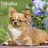 Chihuahua Calendar 2019