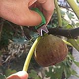 1pcs en Cueillette Ciseaux Anneaux pratique et outil pratique Bague réglable récolte Fruits outils de jardin