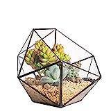 Modern Handmade Triangular Half Ball Bowl Shape Glass Geometric Terrarium Balcony Tabletop Miniature Bonsai Flower Pot Window Sill Centerpiece Display Container Planter for Succulent Plant Cacti