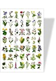 Achat nature - poster nature fleurs