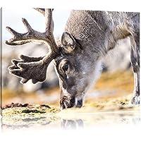 Mangiare dolci renne, Formato: 60x40 su tela, XXL enormi immagini completamente Pagina con la barella, stampa d'arte sul murale con telaio, più economico di pittura o un dipinto a olio, non un manifesto o un banner,