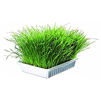 2 X PACKS OF GROW YOUR OWN TRIXIE CAT GRASS | TWIN PACK INCLUDES 2 X 100g OF SEEDS IN GROWING COMPOST AND 2 X GROWING TRAYS 51JUi12cExL