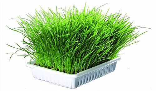 Trixie Cat Grass, various amounts with tray option if required (100g seed with tray) 1