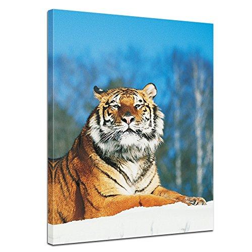 Bilderdepot24 Immagine su telaio a cunei Tigre nella neve - 60 x 80 cm - Già montato sul telaio, Stampa artistica intelaiata e pronta da appendere