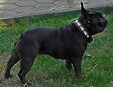 Halsband Leder Indigo Mosaik Braun Schwarz extra Breit M L XL Lederhalsband Hund Tysons Schwarz (M, Braun)