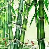 YiShuQiang Wallpaper Fototapeten Grüne Wasser-Bambus-Wandaufkleber-Ausgangswand-Dekoration Wandbilder Wohnzimmer Schlafzimmer Dekoration Fototapetens