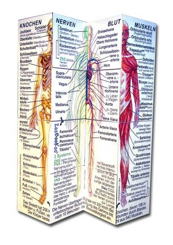Der Menschliche Koerper (Würfel Körper)