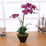 Künstliche Orchidee im Topf Lila mit 3 Rispen 55cm Groß I ECHT WIRKEND I Phalaenopsis Orchideen Kunstblume I Orchidaceae