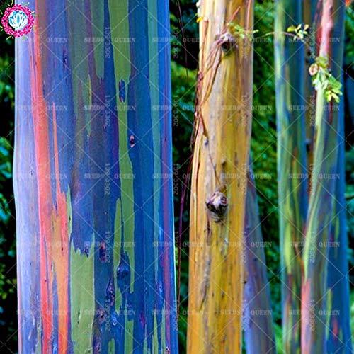Shopmeeko 100 plants de concombre Cucumis Sativus plantes Cuke plantes potagÚres vert fournitures de jardin Livraison gratuite: Clear